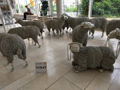 Sheep with phones for heads, Frankfurt, June 2018