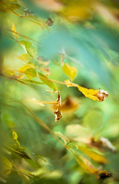 Autumn Leaves 2c