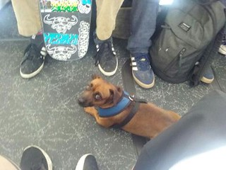 Dogs of MUNI dropping some Blue Steel