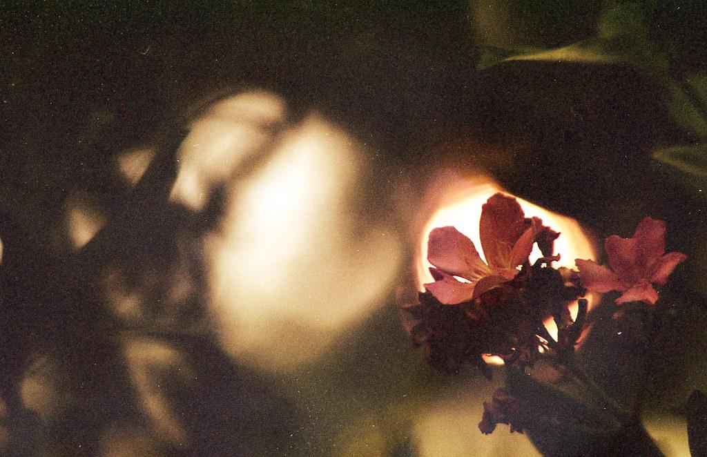flower and California fire sun