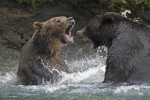 Beary Unhappy