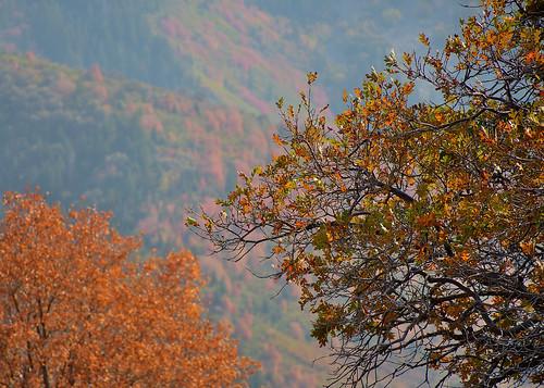 eechillington nikond7500 bellscanyon trees vista utah hiking nature saltlakecity