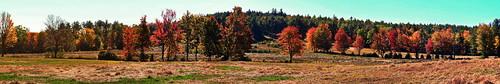 foliage nikon coolpix trees landscape