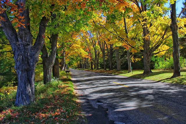 Along Potter Road, BearLake, Michigan
