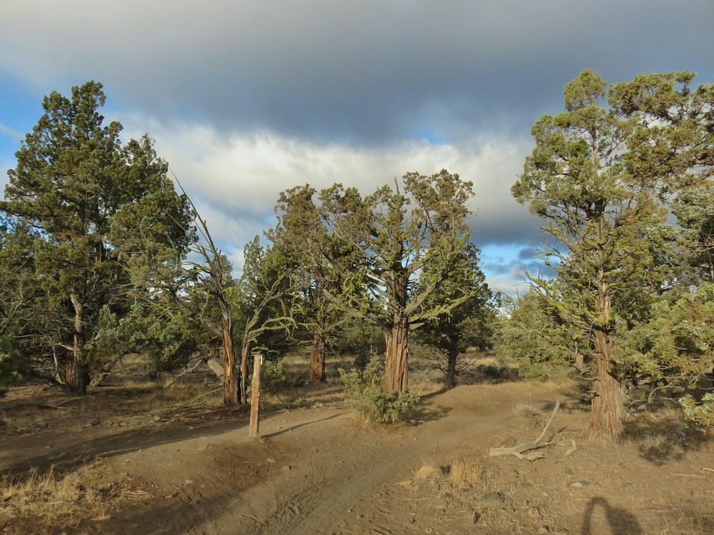 Headgate Trail