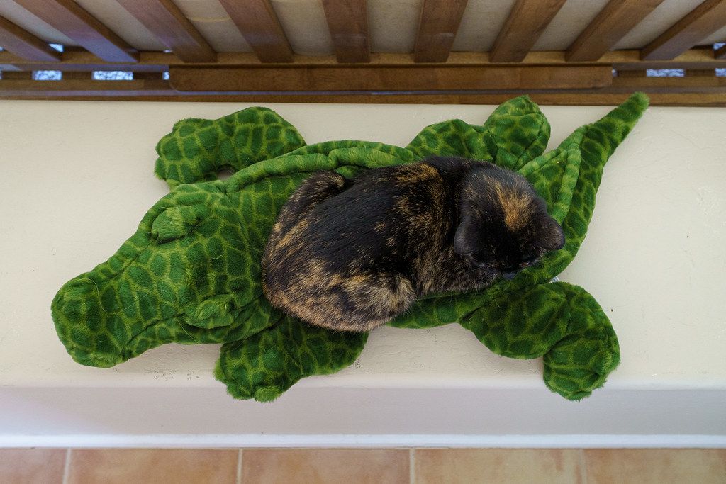 Our cat Trixie sleeps on top of an alligator stuffed animal on October 8, 2020. Original: _RAC6289.arw