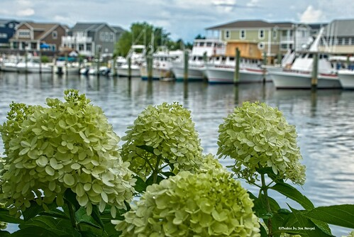 canalview lewesde de lowerslowerdelaware lsd lewes sussexcounty delaware delmarva afternoon summer summertime flower flowers boat boats boatdock harbor marina canal lewesrehobothcanal lewesandrehobothcanal water waves outdoor sky clouds cloudy onlyindelaware visitdelaware view