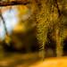 Tree in park in Orenburg / Дерево в парке в Оренбурге