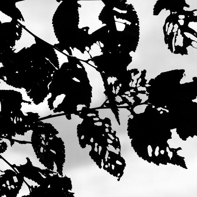 herfstimpressie / autumn impression