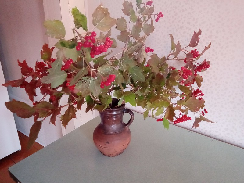 Калина красная в вазе
