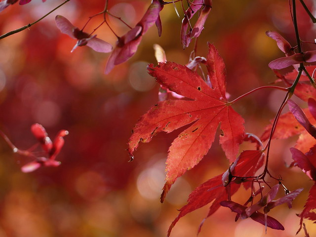 Shades of red...