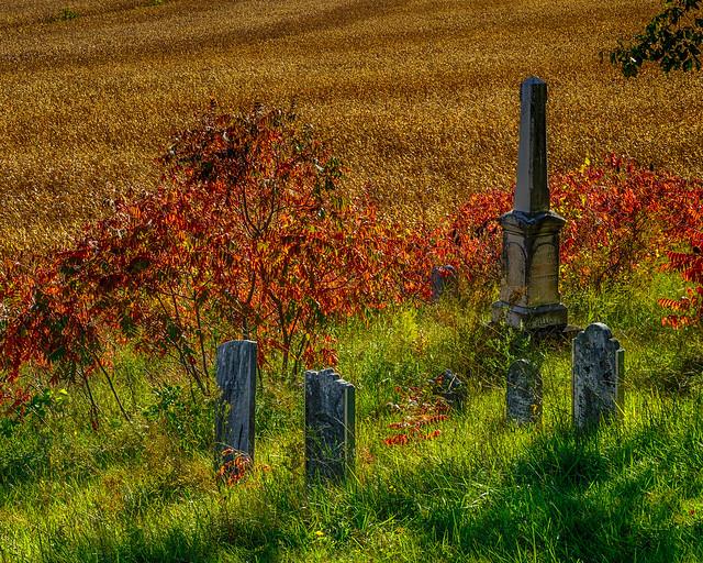 Autumn's Haunting Reminder - 4559