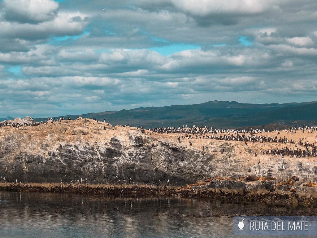 Navegación Canal de Beagle, isla de los pájaros