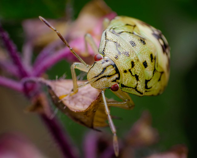 Flickr: The Insect Porn Pool