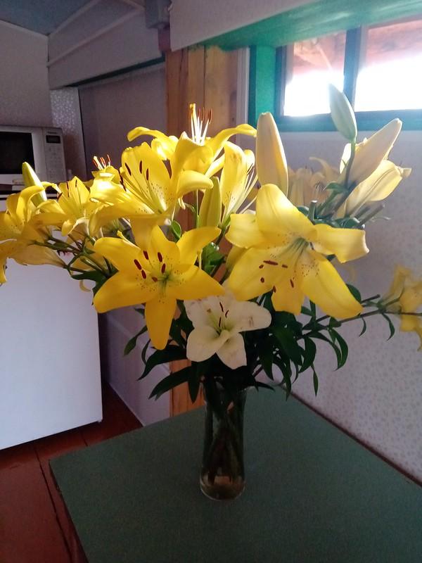 Лилейник жёлтый в вазе