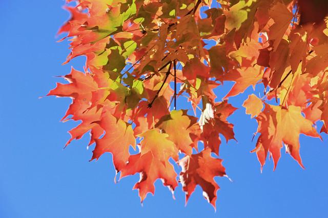 October Color Burst . . .