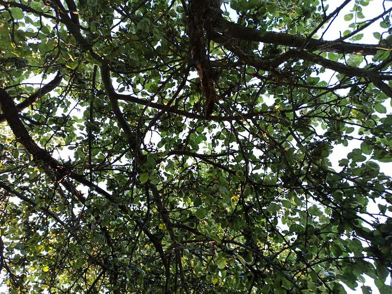 Деревенская природа