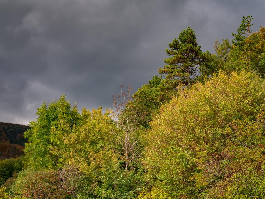 Début d'automne dans les Vosges du Nord... 50461362886_f4fe475fc9_b