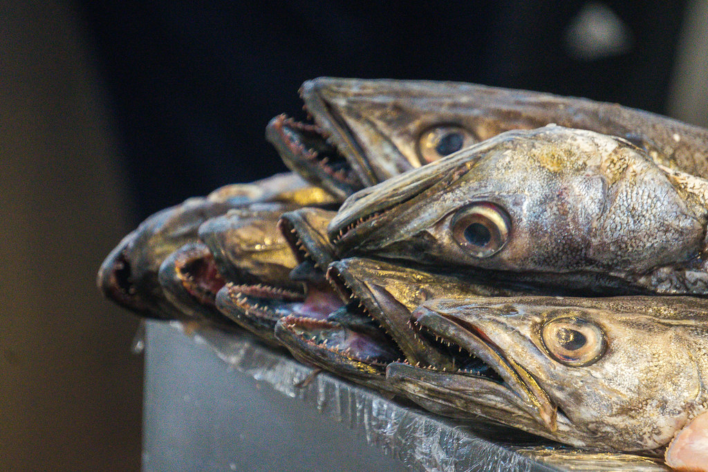 A close-up of fish in the Cadiz Fish Market. There are a few fish with sharp teeth, creepy looking