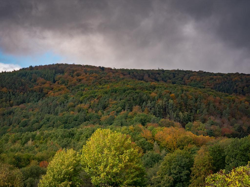 Début d'automne dans les Vosges du Nord... 50461525167_71cd59cae1_b