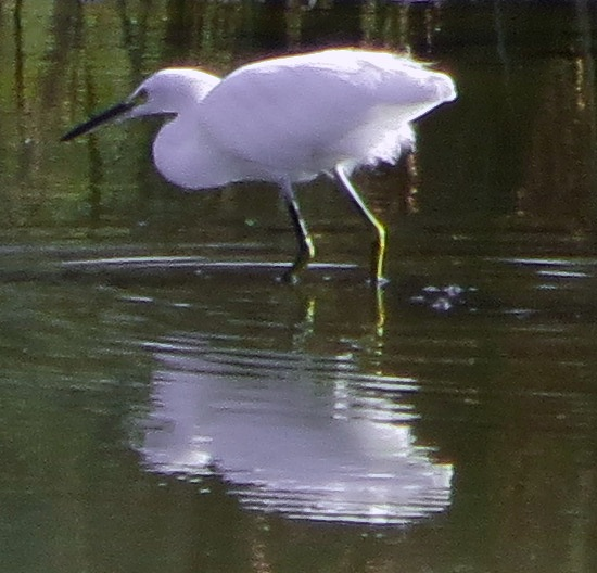 egret + zoom = art project :)