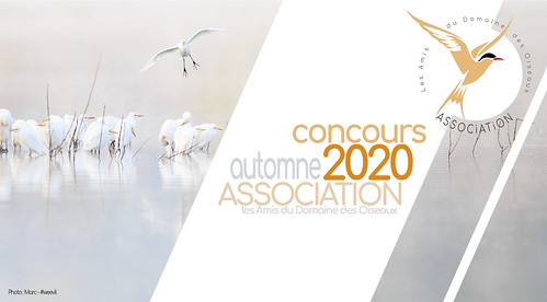 Concours automne 2020