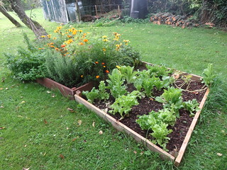 Herb & Lettuce Beds - still going strong | by Mary Loosemore