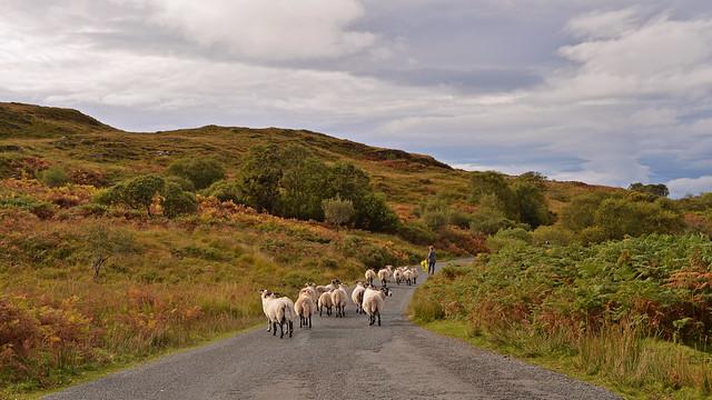 The Shepherdess..