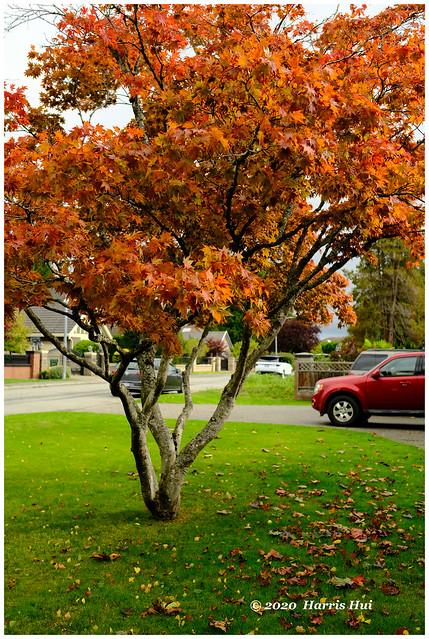 The Tree And The Car - Calder XTT0331e