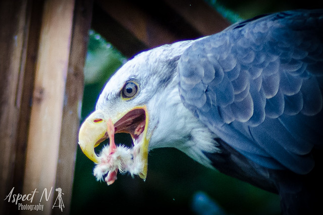 Stunning birds of Warwick 😉😂