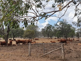 The Darling Downs was opened up by pastoralist