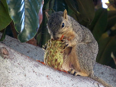 Squirrel Breakfast