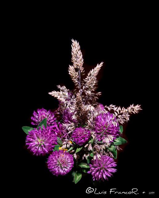 Flores silvestres - wild flowers
