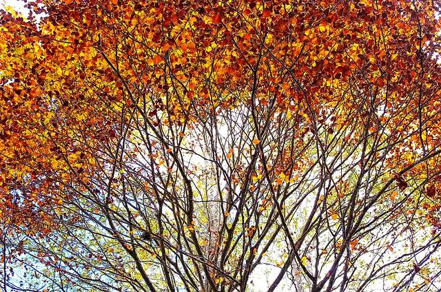 Autumn blooming