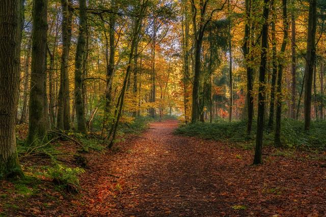 Autumn in Tillegem wood