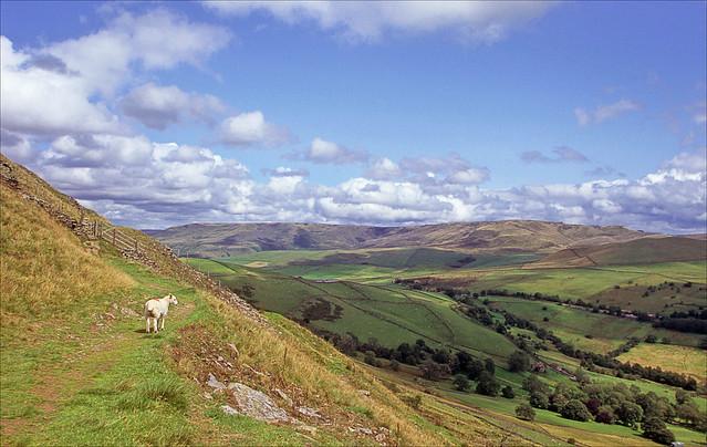 lamb's eye view