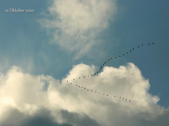 Bye bye cranes see you next year