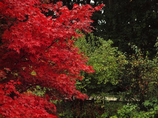 QA134240 Fotograf sieht rot