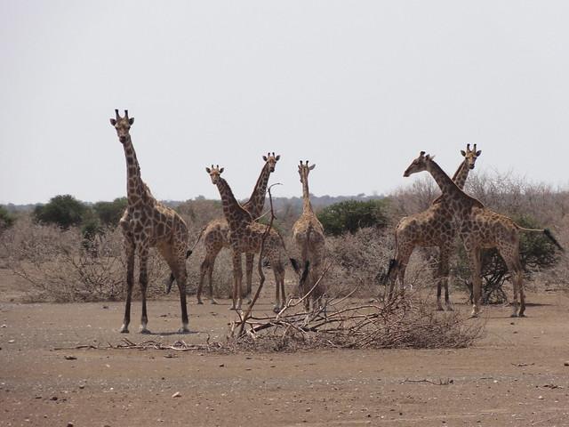 Drought related photos in Africa - Credit: Cornel Vermaak