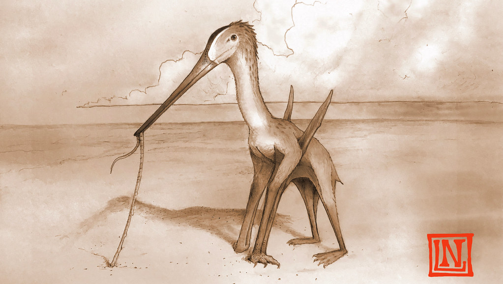 Drawing of a pterosaur wading in water, catching a worm in its beak
