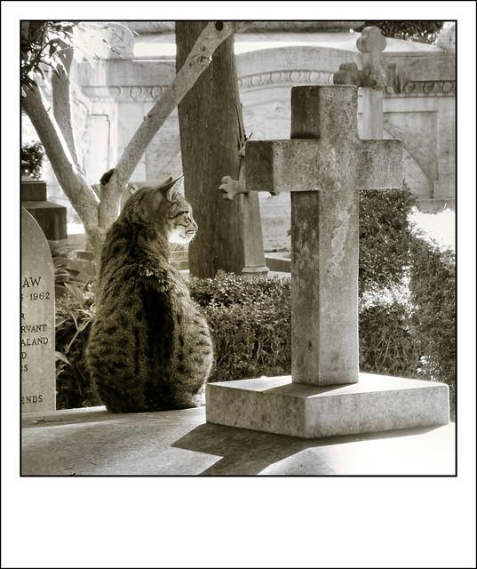 Roma - Cimitero acattolico - Ottobre 2020