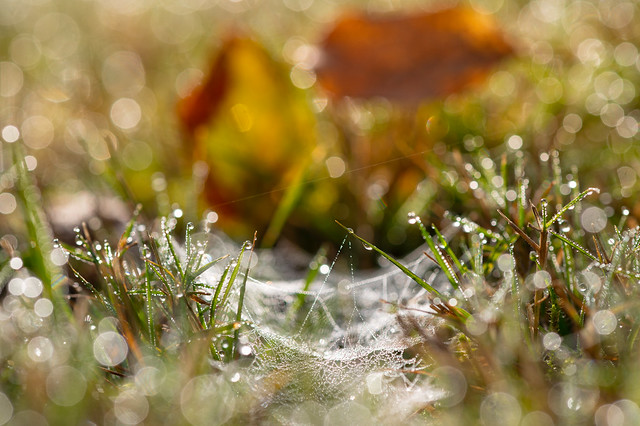 Spiders web in the grass after a cold autumn night - My entry for todays