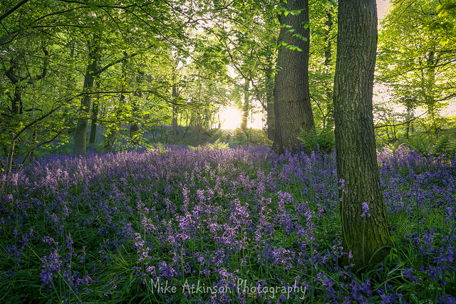The Sunlight & The Bluebells (Revisited).
