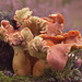 Macro Mushrooms_00035