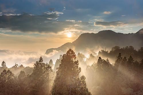 阿里山鄉 嘉義縣 台湾 taiwan sunset light forest 森林 日落