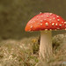 Macro Mushrooms_00028