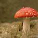 Macro Mushrooms_00028