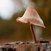 Macro Mushrooms_00038