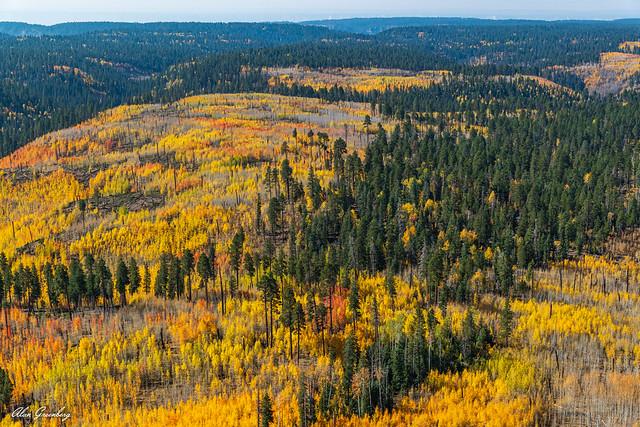 Fall foliage, Grand Canyon NP