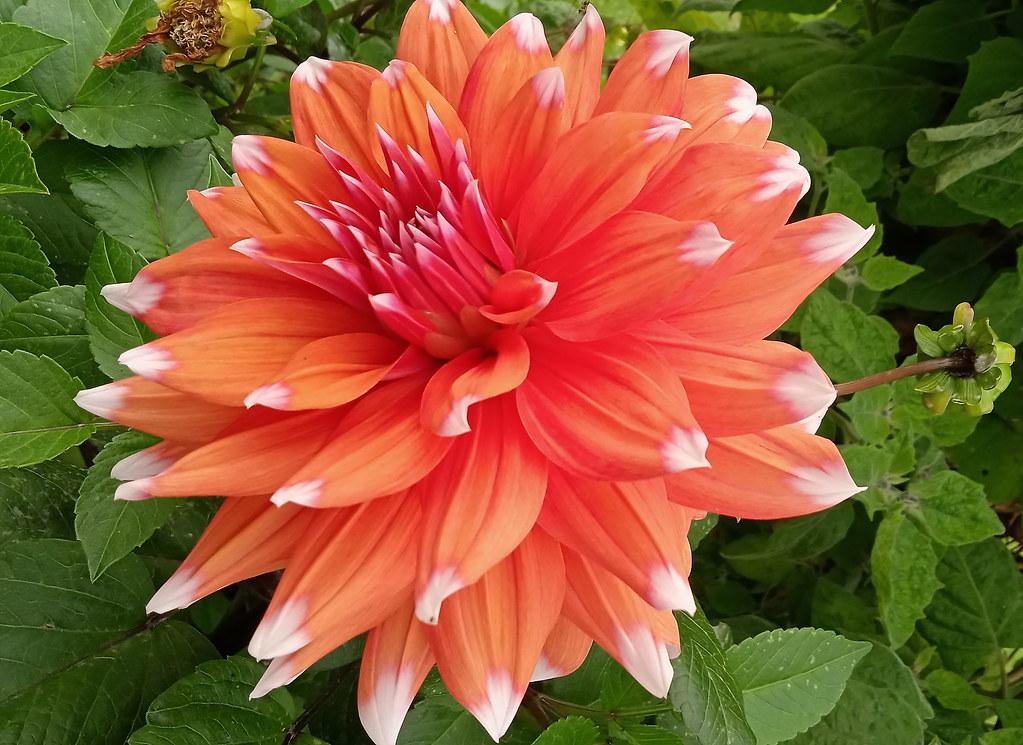 Uma flor no Outono